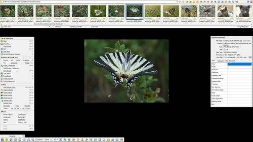 FastStone Image Viewer - full screen mode